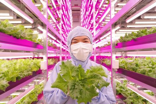 最大规模全led照明植物工厂於日本投产