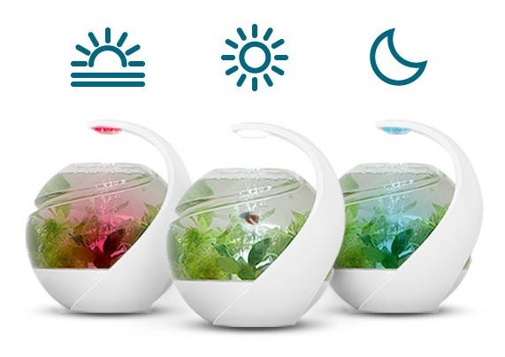 「AVO」的自動清洗魚缸