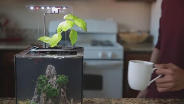 懶人LED生態魚缸