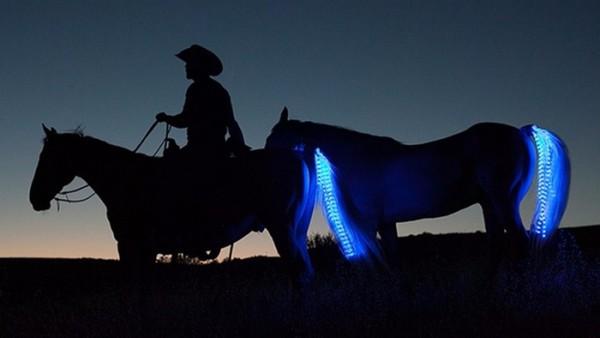 美國的一間新創公司Tail Lights為馬匹打造了專屬的夜晚配件:裝在馬尾上的LED燈。(所有照片來源:Tail Lights)