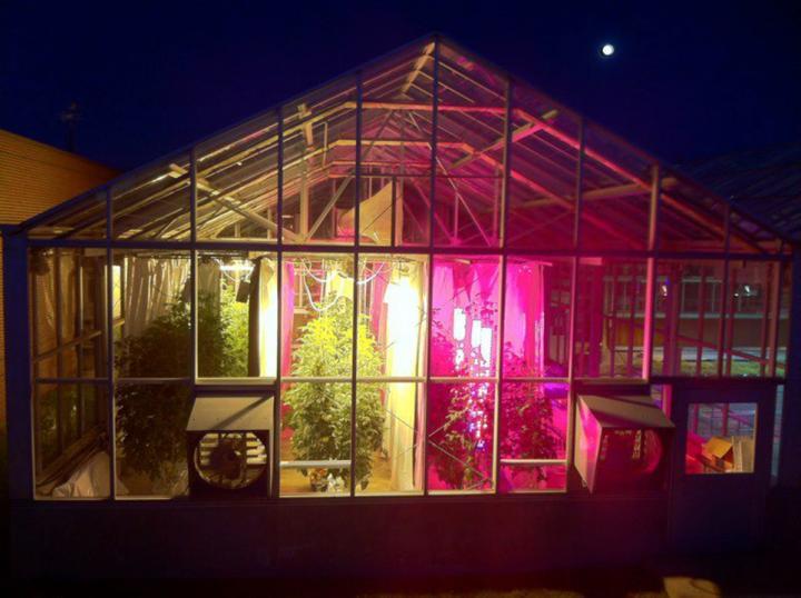 溫室栽種的番茄得到自然陽光照射輔以LED植物生長燈光源。