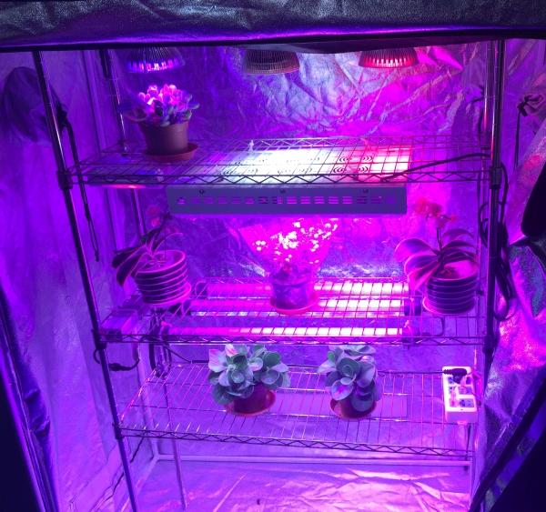 LED植物照明