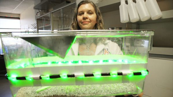 實驗用的透明容器,外面貼上綠色 LED 光源。