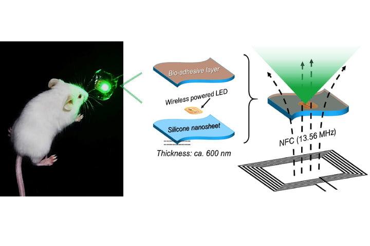 日本早稻田大學(Waseda University)研究者已開發出一個由LED晶片與生物粘附奈米薄片構成的可植入式裝置,能夠通過光動力療法成功縮小老鼠體內的腫瘤。