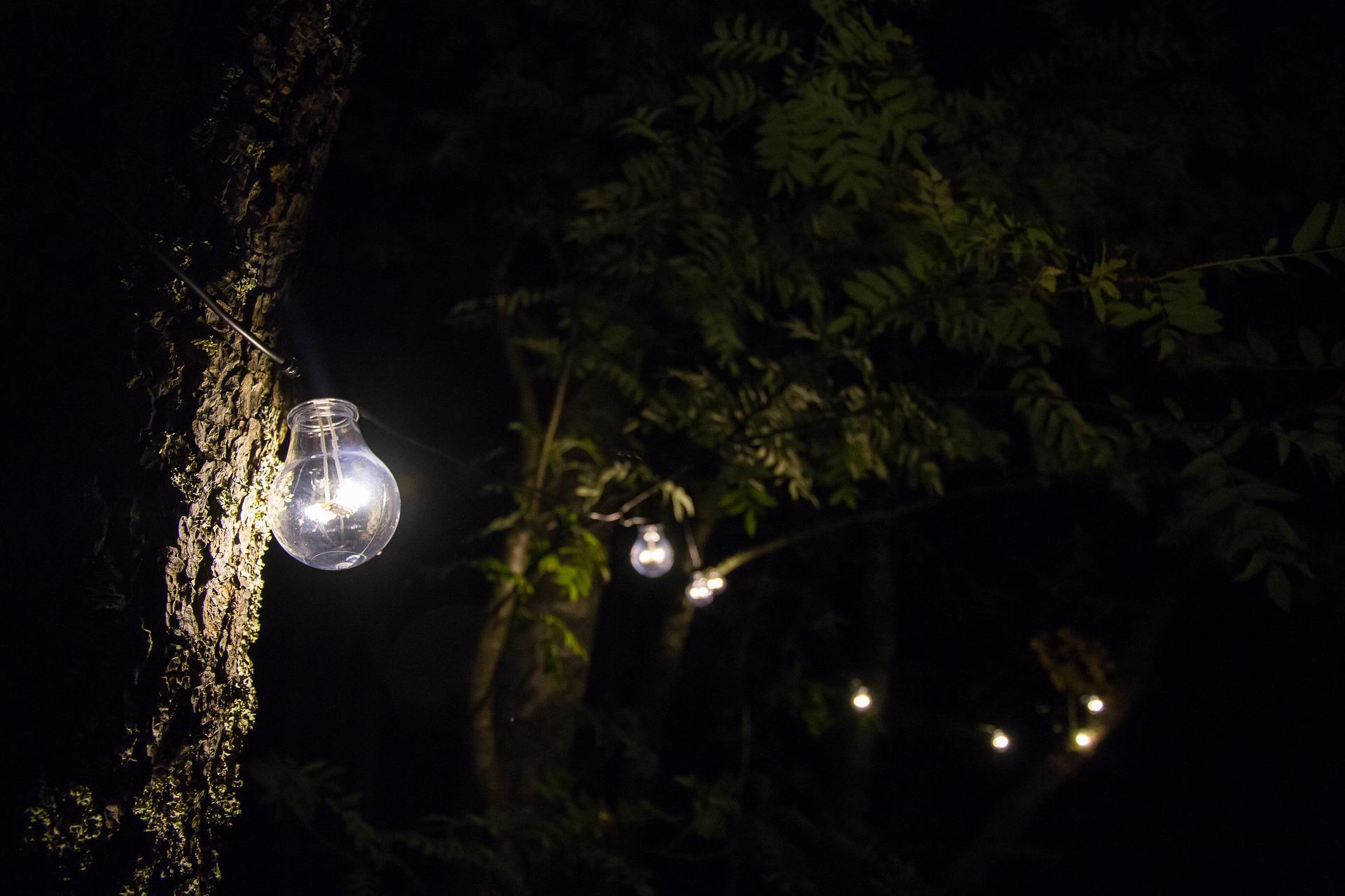 植物能發電並點亮LED燈泡